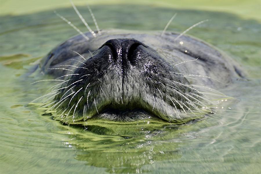 嗅覚の優れた動物